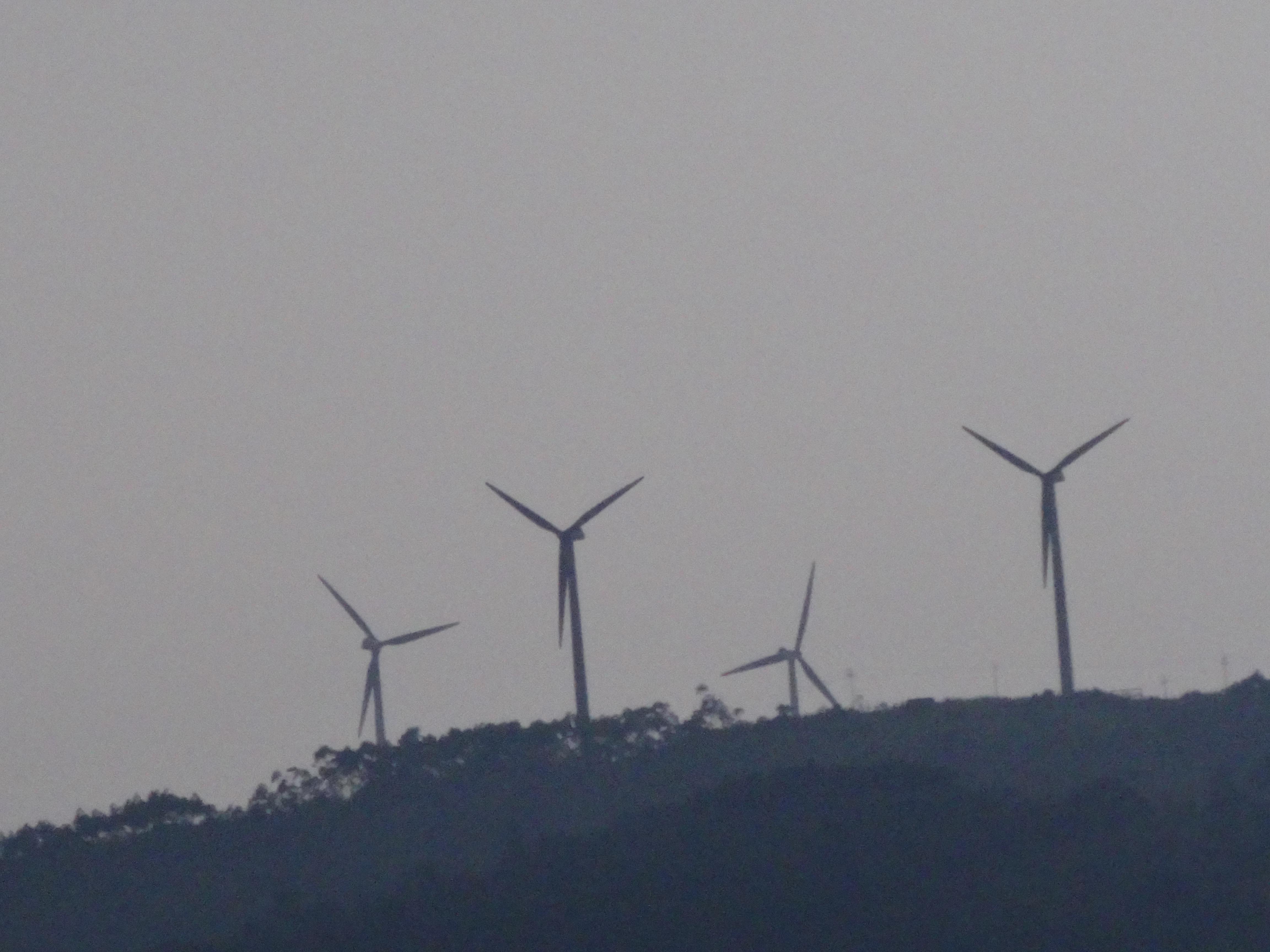rustling wind